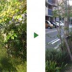 マンション周囲の植え込み600㎡植木100本の手入れ 大阪市鶴見区