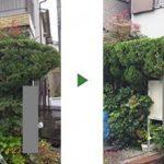 水路沿いのカイズカイブキの生垣10mを剪定 大阪府門真市