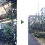 マンションの植木を剪定~シラカシ20本とアベリアの植え込み~ 大阪府高槻市