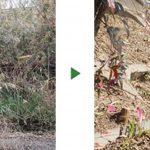 敷地の斜面に生えた雑草と木にお困り〜草刈りと木の伐採〜 大阪府豊中市