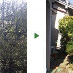 約3年も手入れされていない空き家の庭の草刈り・剪定 大阪府吹田市