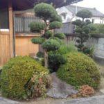 年1回のマキ剪定|玄関横の植栽をきれいに整えたい 奈良県生駒市