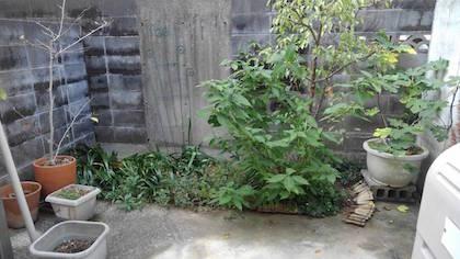 作業前花壇