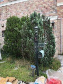 吹田市で植木の剪定と支柱設置をした事例 施術前