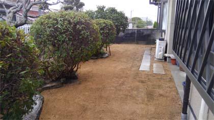 作業後の芝生
