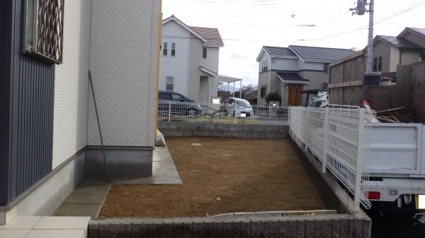 高麗芝 植え付け後