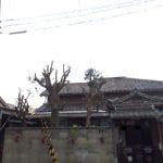 塀からはみ出た木に苦情|隣の駐車場の邪魔にならないよう小さく剪定 大阪市此花区