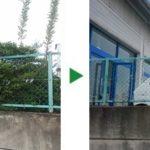 大阪府枚方市 フェンスに隣接したツゲの伐採・抜根