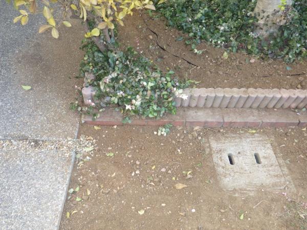 玄関先の巨大な根を取り除いた事例 作業後
