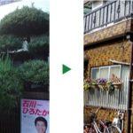 高さ2mの生垣(カイズカイブキ)や庭木の剪定 京都府京都市伏見区