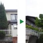 植木屋が教える植栽する際に気をつけること~ソヨゴの植栽事例(奈良県奈良市)~